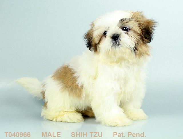 Puppies for sale | Petland Columbus, GA