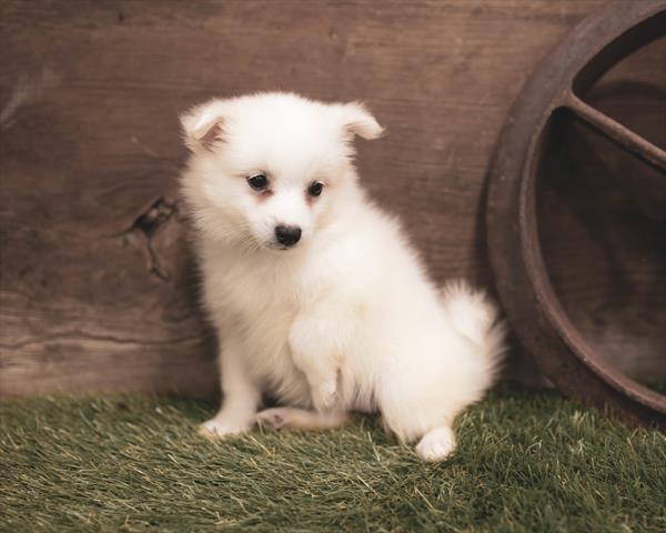 Puppies for sale | Petland Columbus, GA